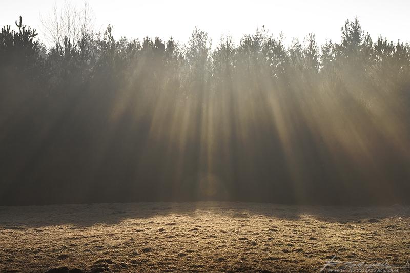 Bobolice. Kwiecień 2011. Natura to reżyser doskonały, a światło to jego potężne narzędzie.